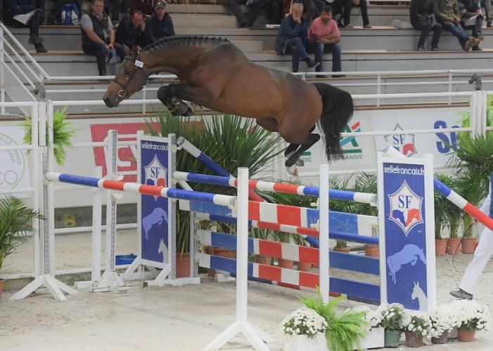 EASY STAR DE TALMA